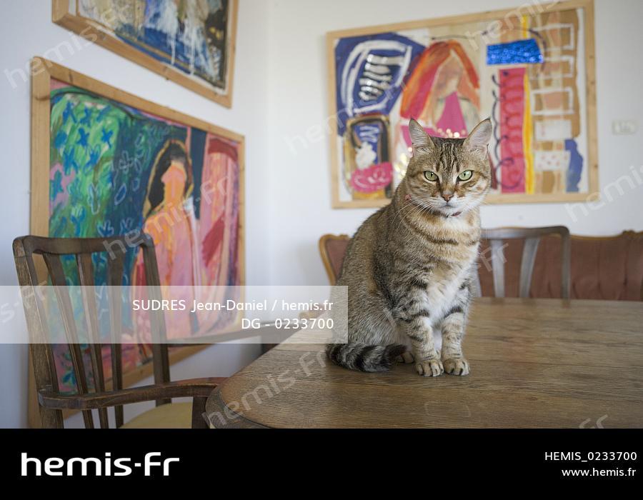 Noir adolescent chatte pic Galerie