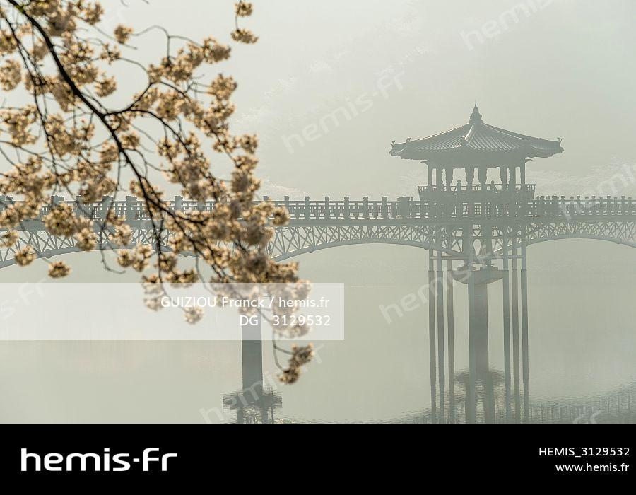 Cherry Blossom asiatique datant en ligne JJ service de rencontres