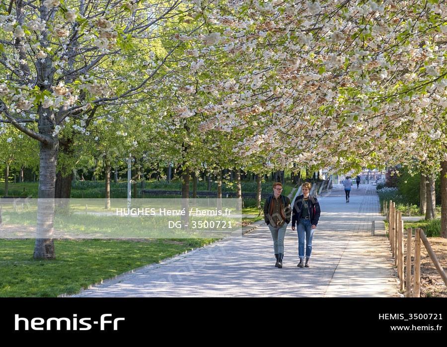 fleurs de cerisier datant mariage