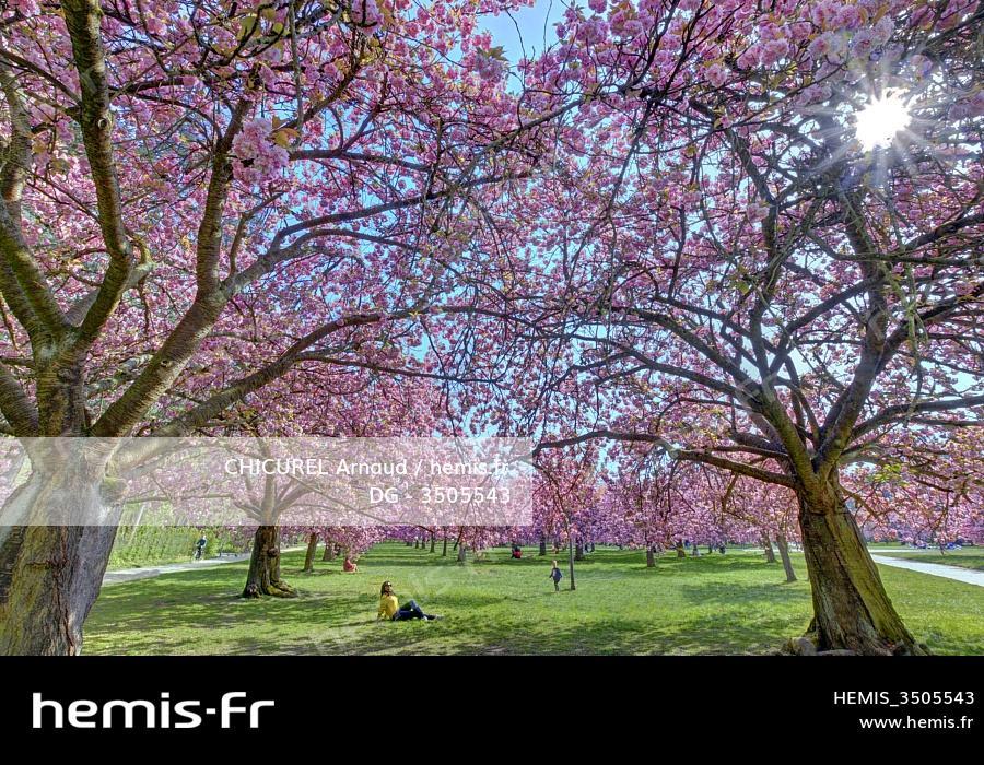 Cherry Blossoms datant Promo Code 2014 Dating Kuwait-www.kuwaitdatingsite.com